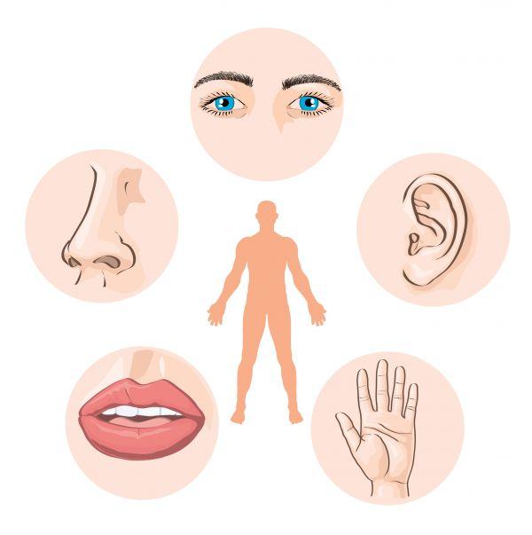 sentidos-do-corpo-humano