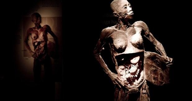 fantastico_corpo_humano_2