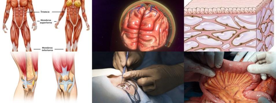 Cinco-Partes-do-Corpo-Humano-Descobertas-Somente-Agora Cinco Partes do Corpo Humano Descobertas Somente Agora