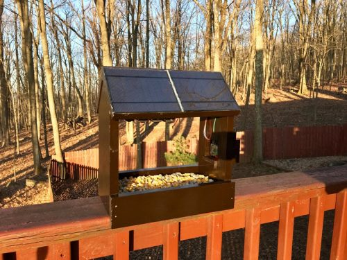 Raspberry Pi- and solar-powered nature camera