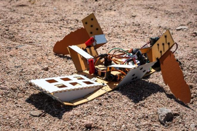 The C-Turtle landmine-clearing robot detects and safely detonates hidden explosives