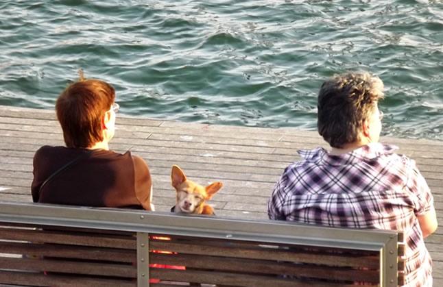 blog-do-xan-barcelona-carrel-del-carrer-cachorro
