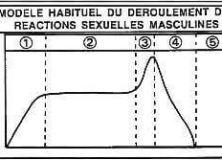 La réponse sexuelle masculine