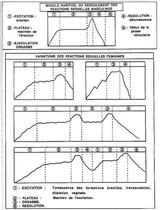 Modele habituel du deroulement des reactions sexuelles masculines et feminines - Master et Johnson