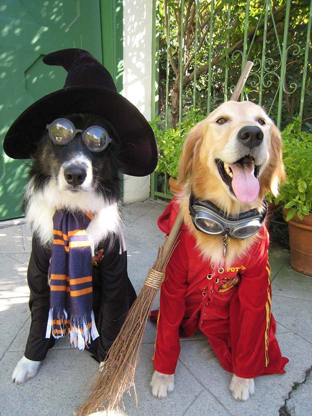 Halloween-Pet-Costumes23__880