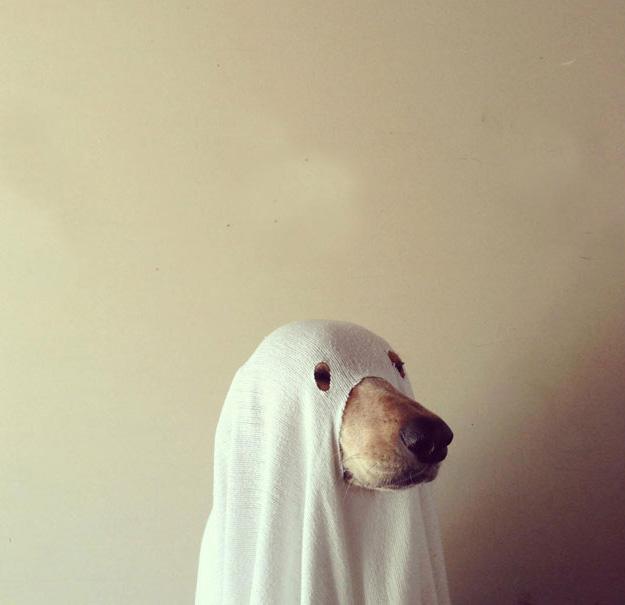 pet-halloween-costume-371__605