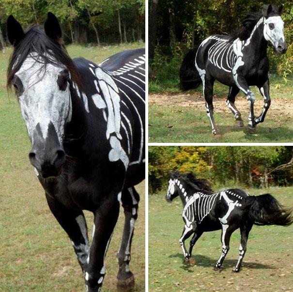 pet-halloween-costume-78