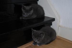 Fluffy en Asha (3)