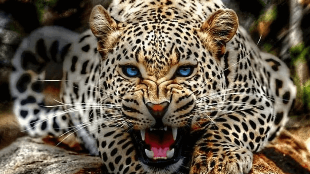 Awesome Cute Wallpapers For Android 20 Hd Tiger Amp Leopard Wallpapers Blogenium Free Wallpapers