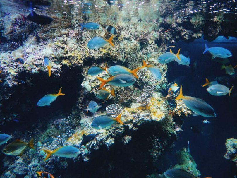 musee-oceanographique-de-monaco