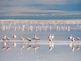 Salar de Uyuni_flamingos