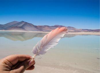 deserto do Atacama_flamingo