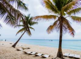 Ilha Saona_coqueiros