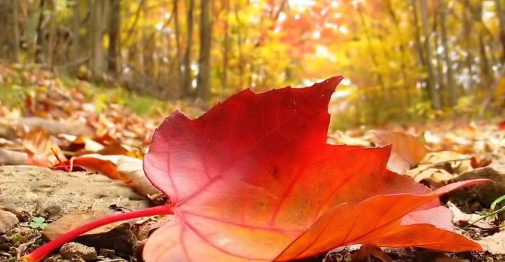 Höstens tips med Ayurveda