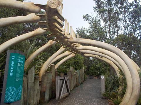 Auckland zoo Te Wao Nui