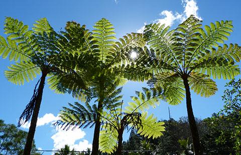 Tribe New Caledonia