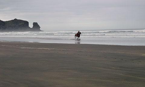 Bethells Beach horses