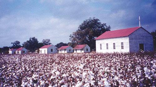 cotton anniversary
