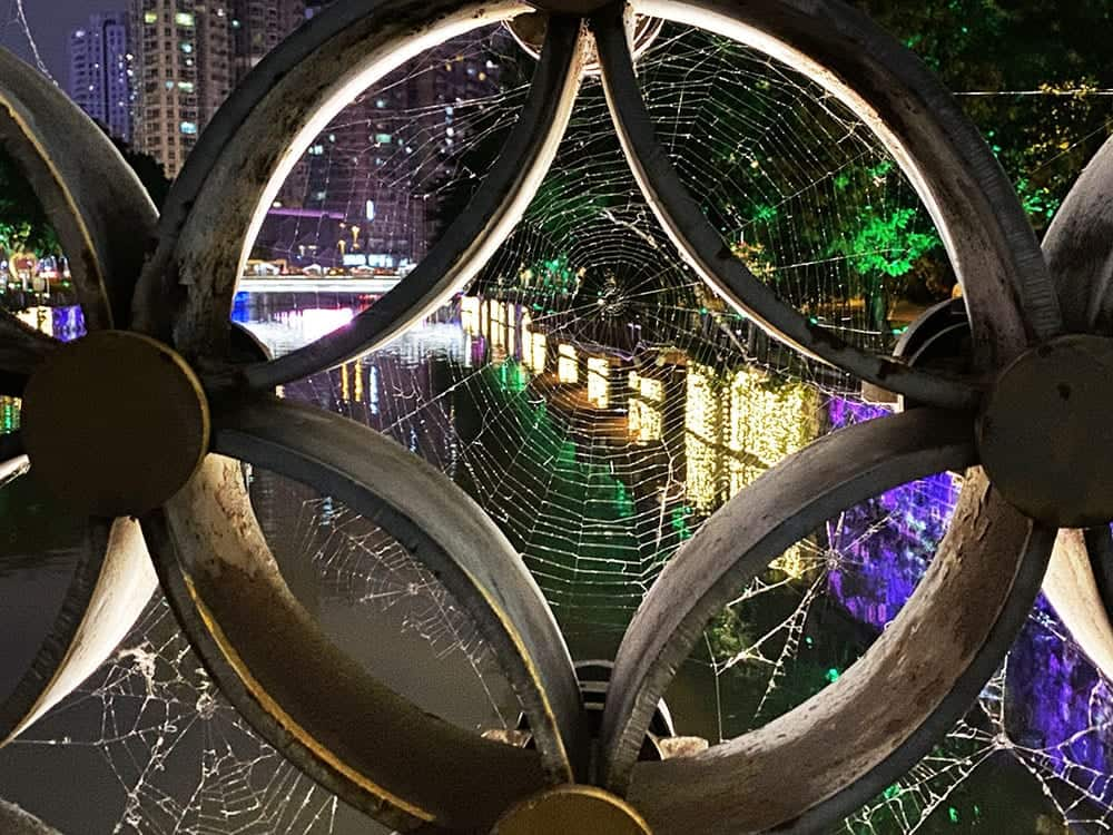 Through a cob web on the Jin River Chengdu