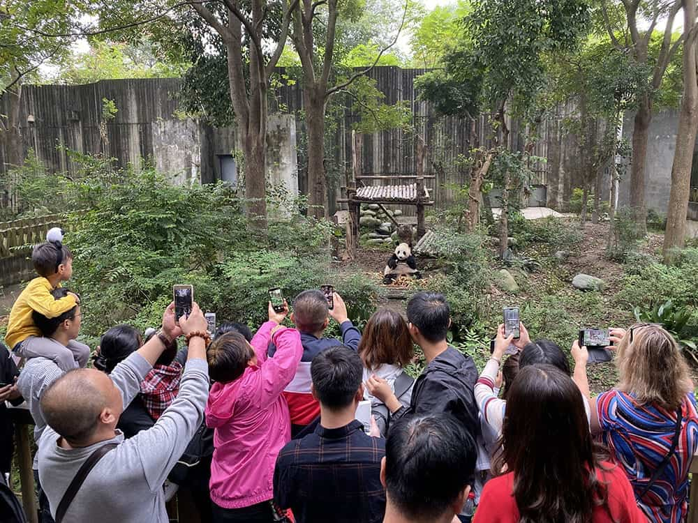 Tourists and phones at the panda base Chengdu