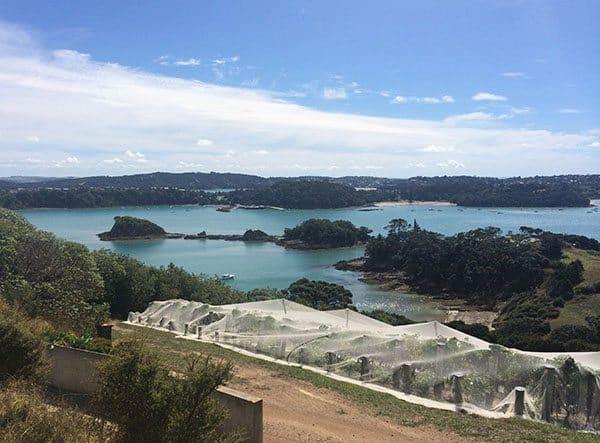 Te Whau view