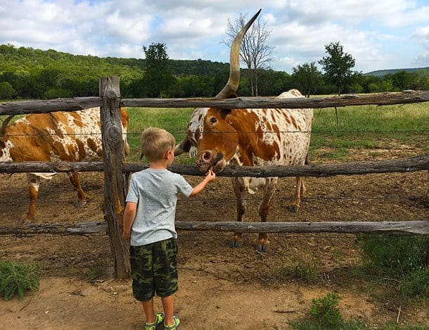 Texas: stay on Wildcatter ranch for cowboy time! - Blogger