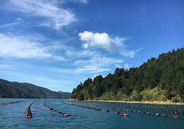 Marlborough sounds mussel farm