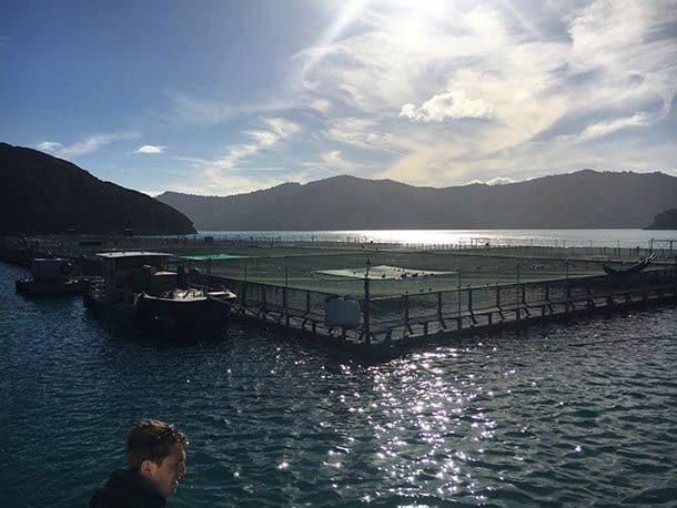 Salmon farm NZ