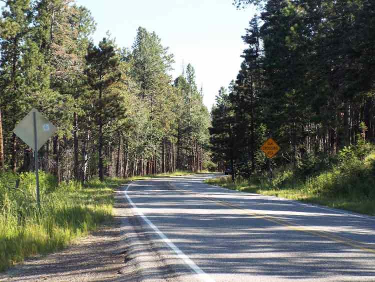 Pine tree lined mountain road through somewhere near Los Alamos New Mexico