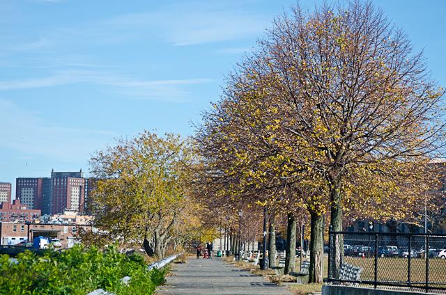 Row of Trees 2
