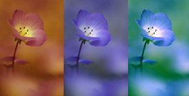 Filtered flowers - photograph by Brent VanFossen, graphics by Lorelle VanFossen, copyright protected