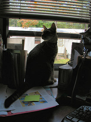 Cat looking out window - photograph copyright Lorelle VanFossen