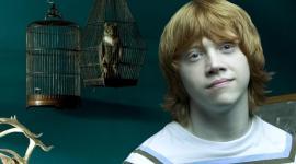 Daniel, Rupert, Emma, y 'La Orden del Fénix', Nominados para los Premios 'Poptastic'