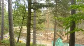 Rodaje en el Bosque Swinley Comenzará el 10 de Junio