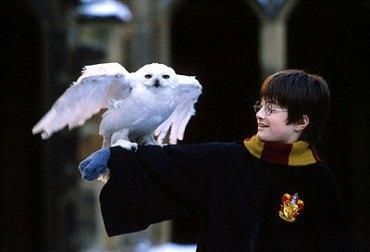 Ecosistema de la India en Peligro por Cautiverio de Lechuzas Inspirado en 'Harry Potter'