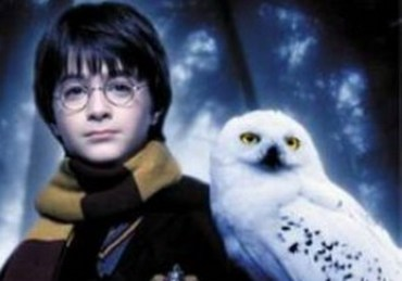Tras Final de la Saga de 'Harry Potter', Cientos de Lechuzas se Quedan sin Hogar