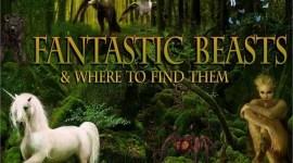 WB Confirma que habrá Magos de los Estados Unidos en 'Animales Fantásticos y dónde Encontrarlos'!