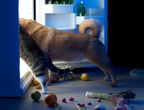 cat-feeding-fridge