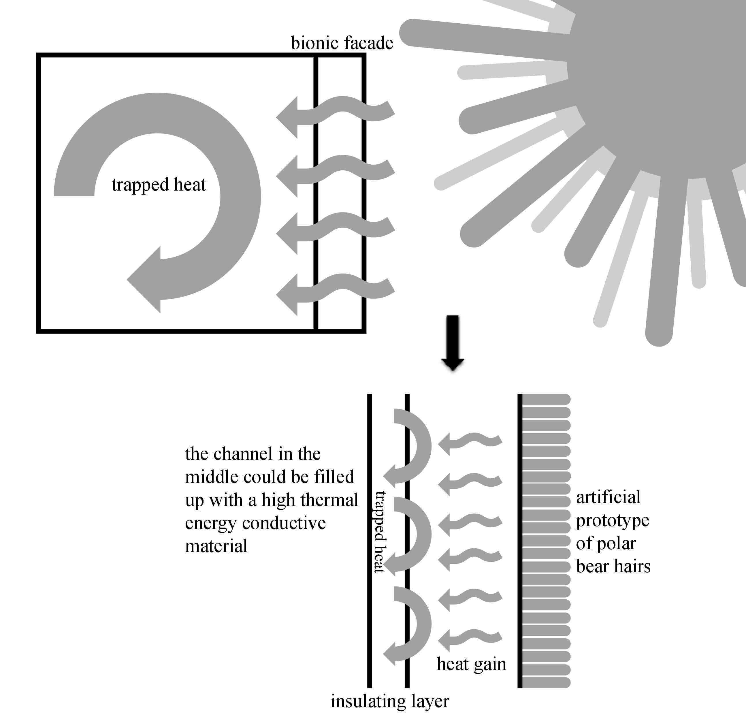 polar bear fur diagram briggs and stratton lawn mower parts 25467 usbdata