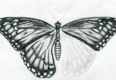 Ideas About Butterfly Drawing On Pinterest How To