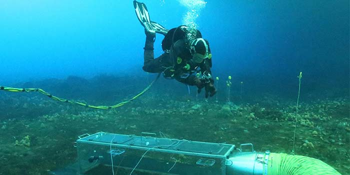 Career As A Marine Biologist And Its Scope