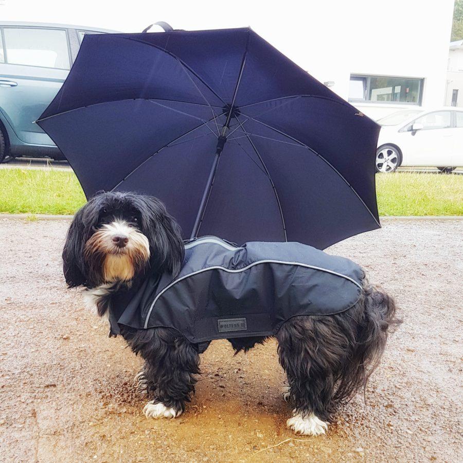 Buffy mit Schirm draußen
