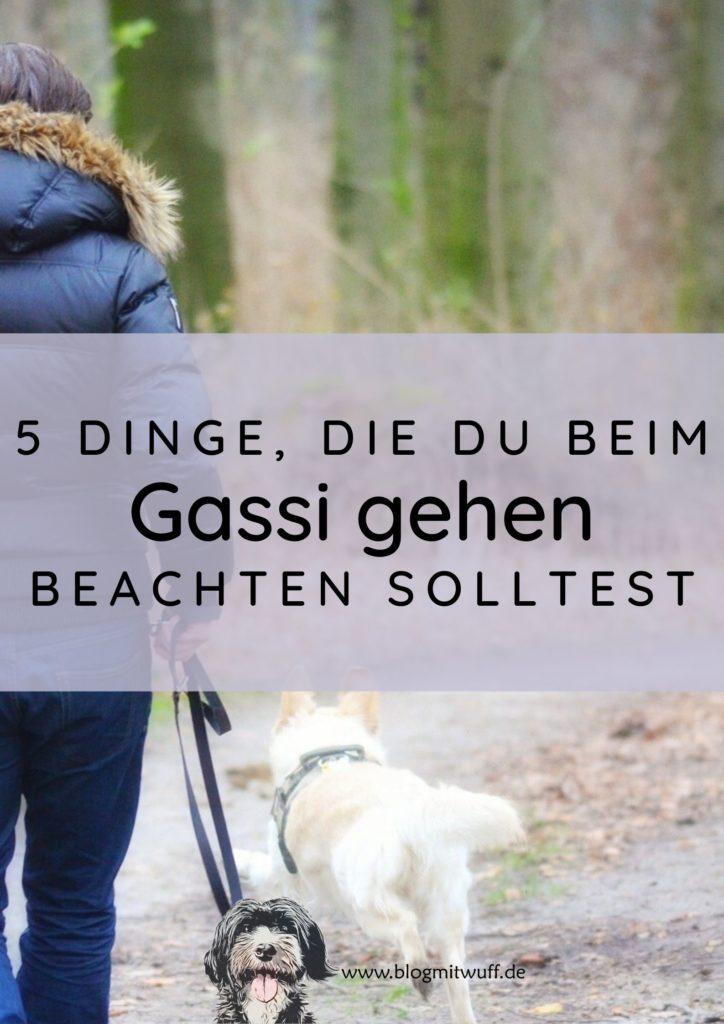 Titelbild zu 5 Dinge die du beim Gassi gehen unbedingt beachten solltest