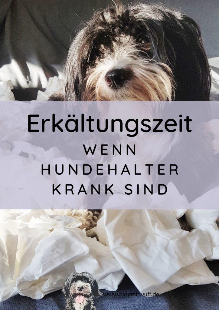 Titelbild zu Erkältungszeit Wenn Hundehalter krank sind