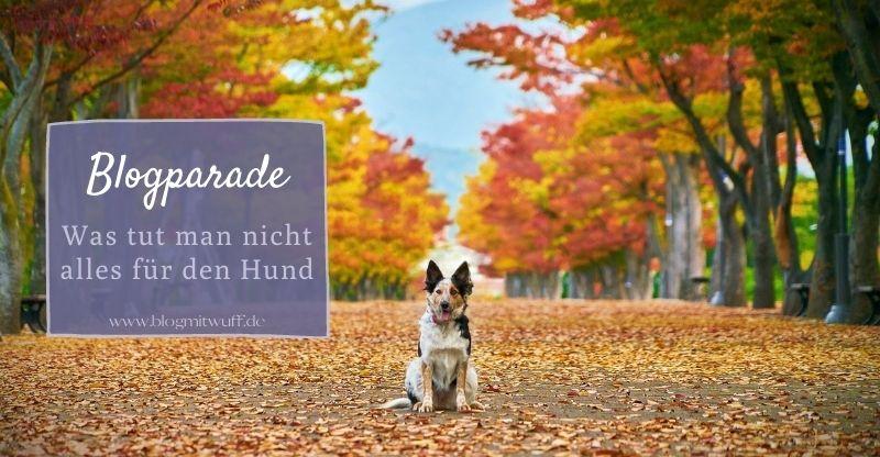 Read more about the article Blogparade: Was tut man nicht alles für den Hund..