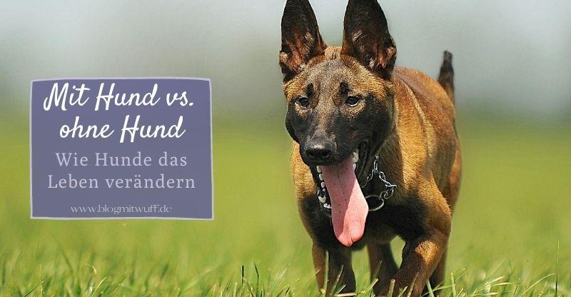 Read more about the article Mit Hund vs. Ohne Hund – Wie Hunde das Leben verändern