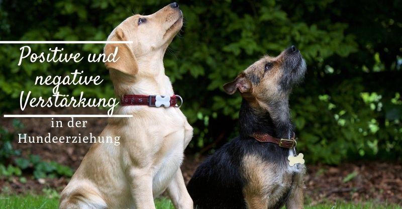Read more about the article Positive und negative Verstärkung in der Hundeerziehung