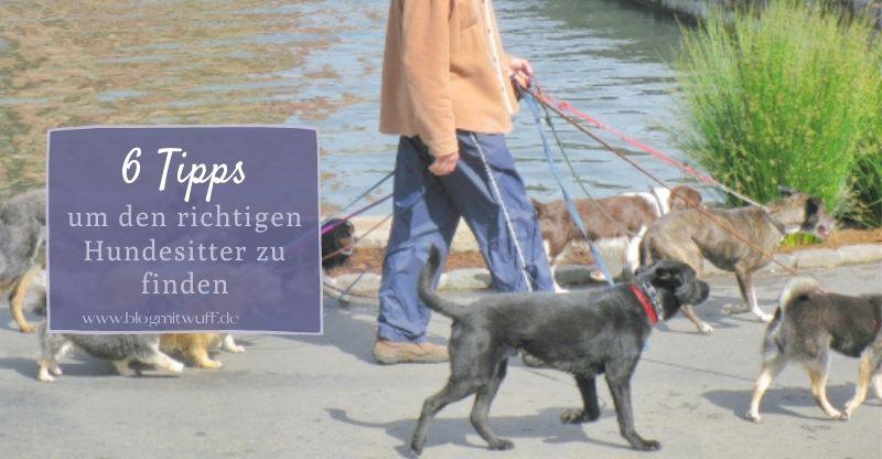 Read more about the article 5 Tipps um den richtigen Hundesitter zu finden