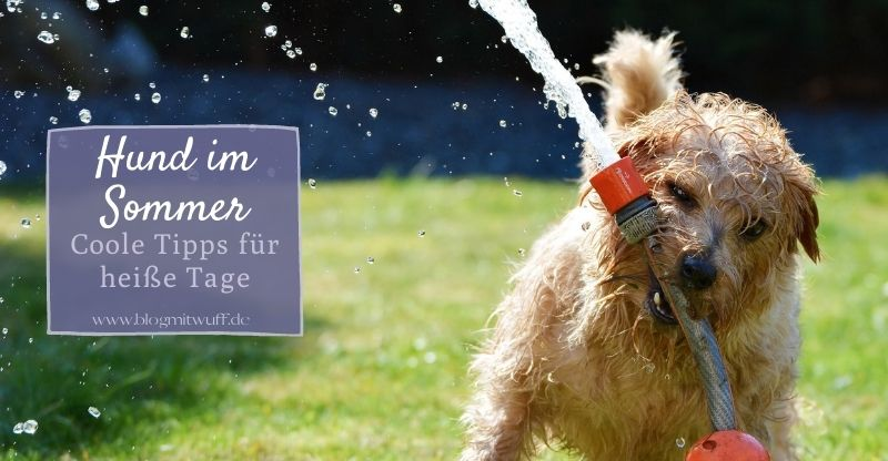Read more about the article Hund im Sommer – Coole Tipps für heiße Tage