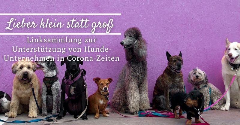 Read more about the article Lieber klein statt groß – Unterstützung für Hunde-Unternehmen in Corona-Zeiten